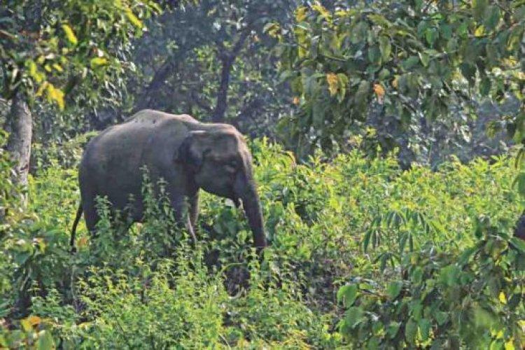 Farmer killed in wild elephant attack in Rangunia